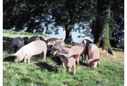 En janvier : c'est la foire au Porc ... Fermier !